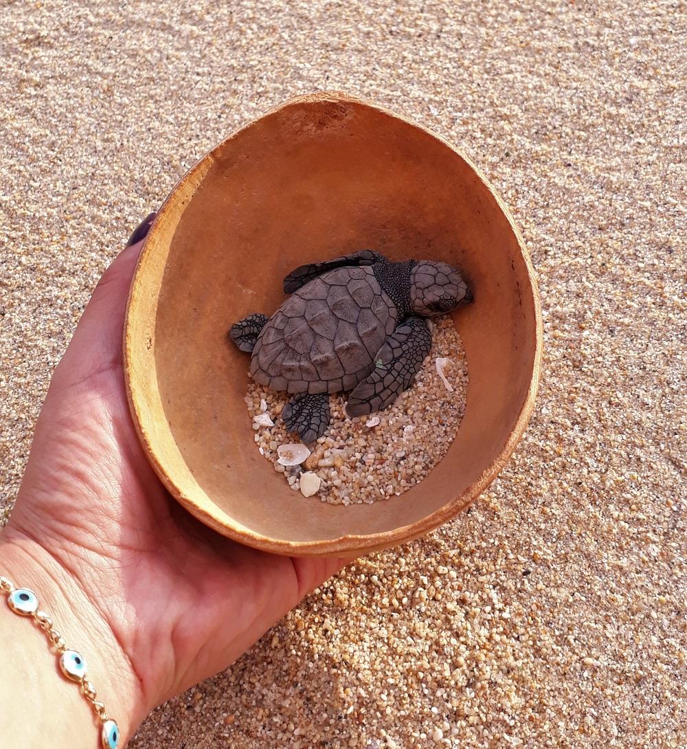 Liberación de tortugas marinas en Puerto Escondido