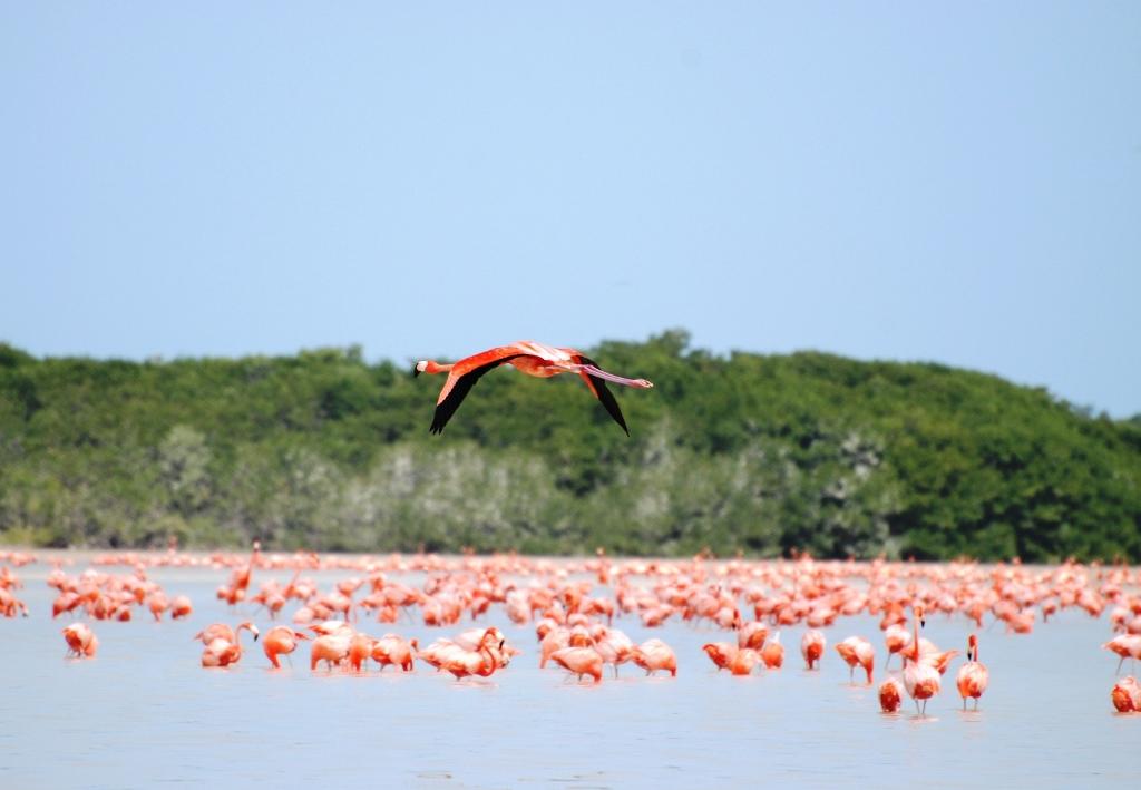 El ecoturismo en México: un viaje a Celestún