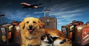 Viajes en avión y hoteles que aceptan mascotas en México