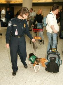 Perros policías en los aeropuertos